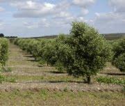 Comissão propõe ajuda a agricultores dos países em desenvolvimento