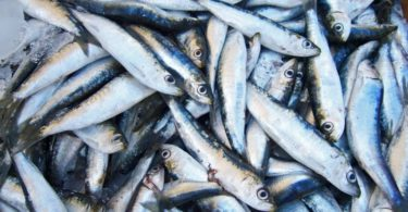 Continente - sardinhas