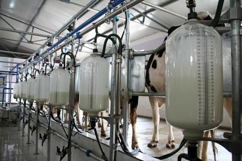 leite sala de ordenha Distribuição Hoje
