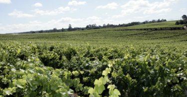 vinhos Sogrape