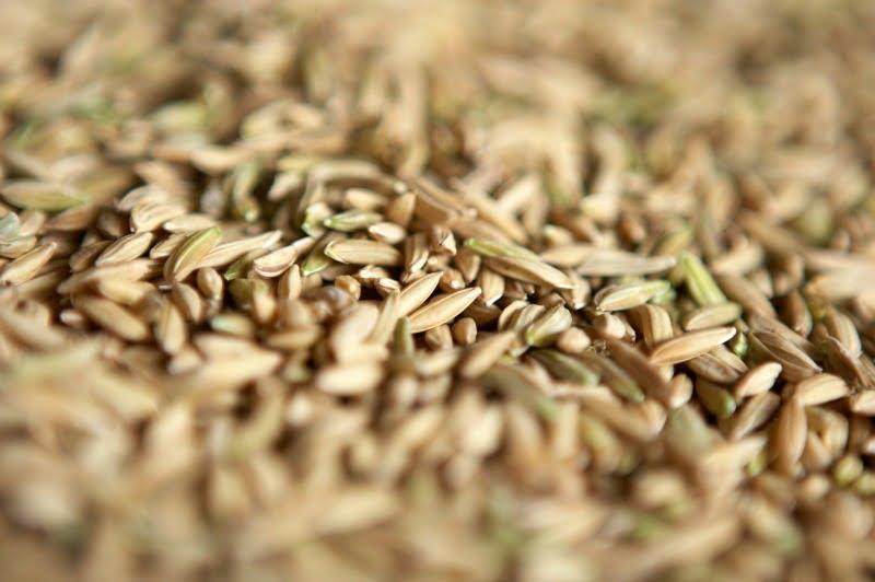 arroz - Distribuição Hoje