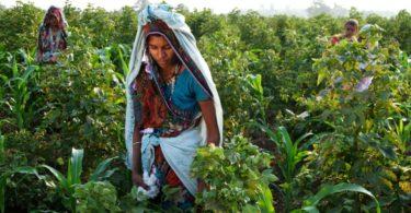 C&A já é o maior utilizador de algodão biológico do mundo