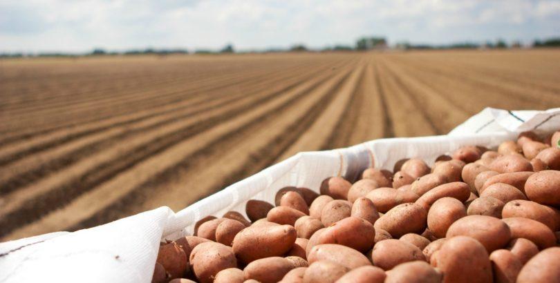 Intermarché apoia campanha dos produtores de batata nacionais
