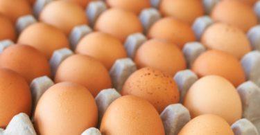 Nestlé quer usar apenas ovos de galinhas criadas ao ar livre