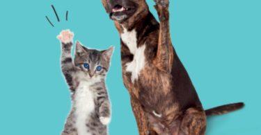 Novo projeto de responsabilidade do Intermarché vai ajudar animais