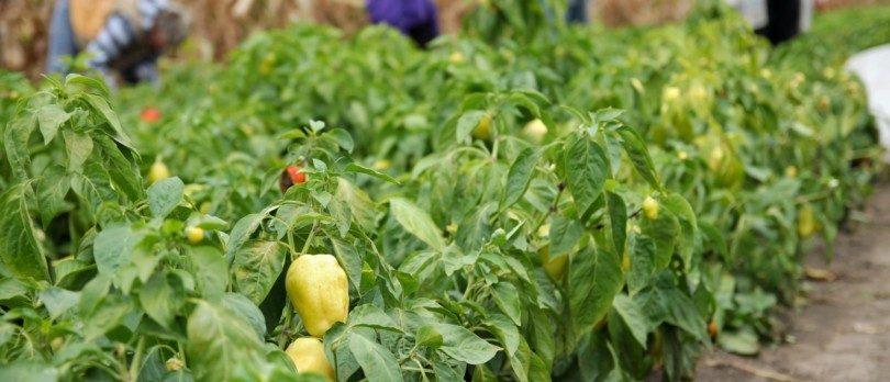 AKI quer ensinar 17 mil alunos a criar hortas biológicas