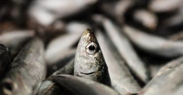 Consumo de produtos de mar pode ajudar a mitigar efeitos da crise climática, diz estudo