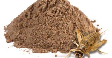 Nutrix desenvolve 'proteína sustentável' à base de insetos