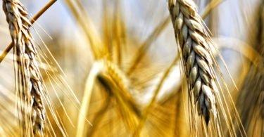 Cerealto prevê terminar o ano com volume de negócios de 228 M€