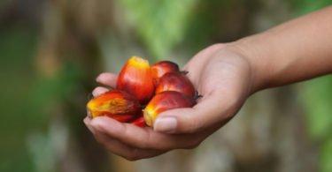 Multinacionais pedem o fim do trabalho forçado na indústria do óleo de palma