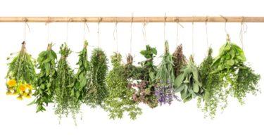 Serão as ervas aromáticas a solução para o consumo excessivo de sal?