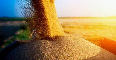Preços dos alimentos em alta, revela FAO