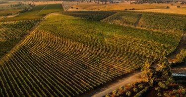 Herdade Grande com nova equipa de enologia, novos vinhos e... novo website