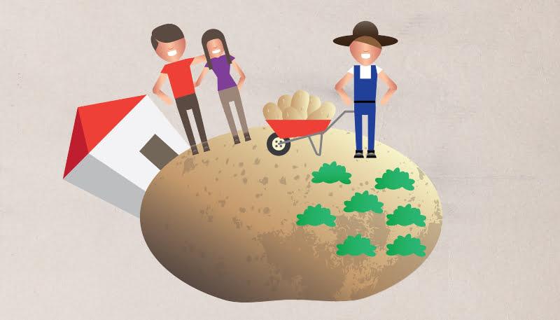 APED volta a juntar-se aos produtores nacionais para promover batata portuguesa