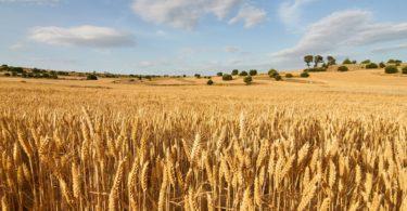 Primeiro-Ministro considera agricultura essencial para o desenvolvimento do país