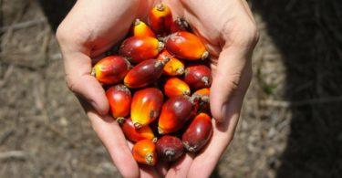 Ferrero publica lista de fornecedores de óleo de palma em esforço para aumentar a transparência