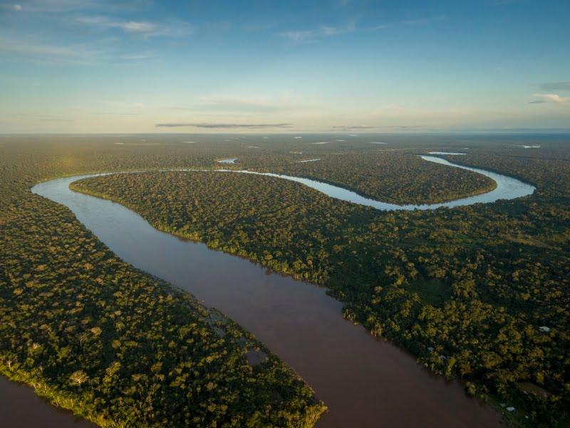 Multinacionais comprometem-se a agir para proteger a biodiversidade