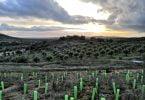 Vinhos do Alentejo contribuem para a reflorestação