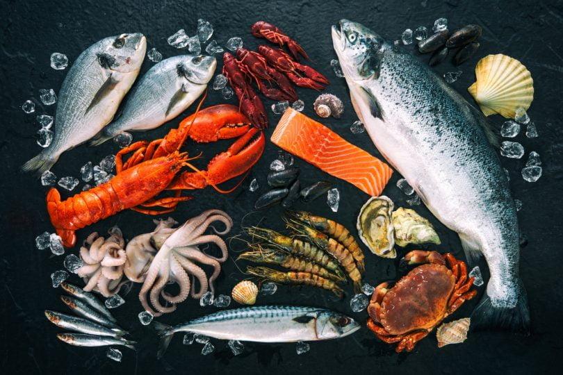 Recursos marinhos podem fornecer 6 vezes mais alimentos do que fornecem atualmente
