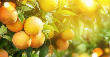 UE produz 6,5 milhões toneladas de laranja em 2018