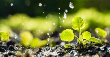 Europa quer trabalho conjunto para um sistema alimentar saudável e sustentável