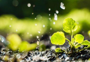 UE quer novas regras para promover a reutilização de água na agricultura