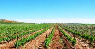 Vendas dos Vinhos do Alentejo aproximam-se das 120 milhões garrafas