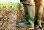 PAN pede ao governo mais apoios no setor agrícola