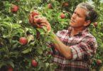 """""""As nossas frutas e legumes chegam ao Sabor da Natureza"""" é o conceito da nova campanha dedicada aos produtos frescos do Continente."""