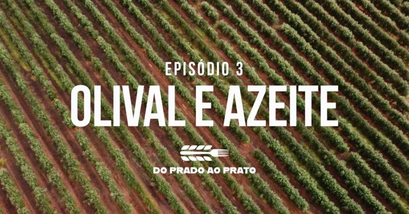 O terceiro episódio do 'Prado ao Prato' coloca em destaque práticas como a mitigação das alterações climáticas na produção de azeite.